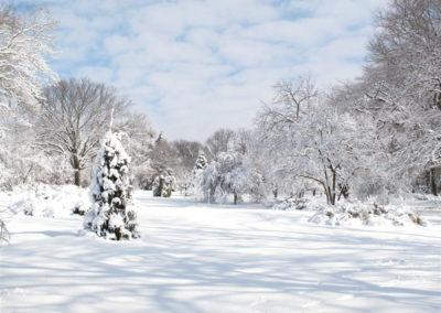 Winter1-web
